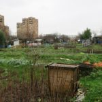 jardins-ouvriers-des-vertus-aubervilliers-olivia-kouassi-jardins-ouvriers-des-vertus-aubervilliers